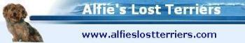 Link to Alfie's Lost Terriers