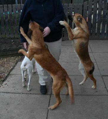 Dog Training Rochdale